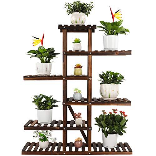 Plant display