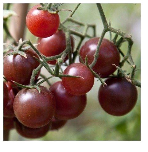 Lot de 10 Graines tomates cocktail chocolat chocolate cherry - Taille : 40 à 60 CM semence