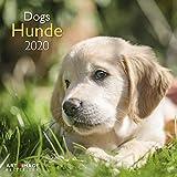 Hunde 2020 A&I - Broschürenkalender - 30x30cm - Wandkalender