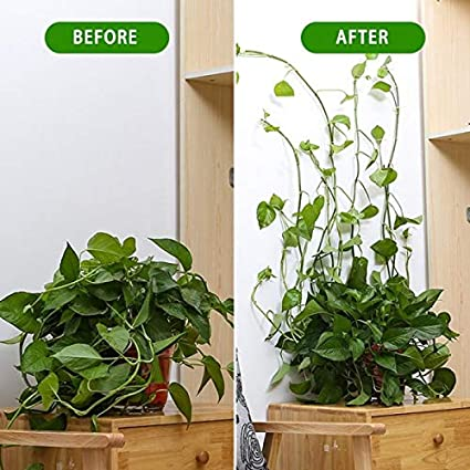 Sticky Plant Fixing Clip for Decoration,Wire Fixing 30PCS Plant Climbing Wall Fixture Clips Vine Climbing Wall Fixer Self-Adhesive Invisible Plant Fixing Hook for Plant Garden Wall Clip Pothos