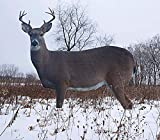 TCDesignerProducts, Whitetail Buck Silhouette Decoy, Hunting Decoys, Deer Hunting