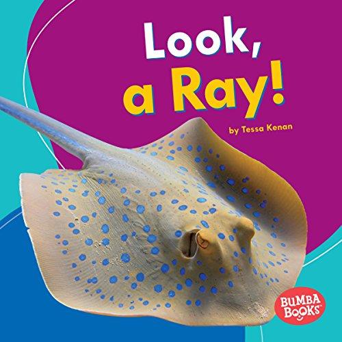 Look, a Ray! copertina