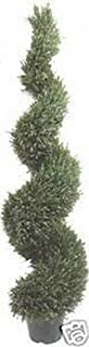 One 6 Foot 4 Inch Outdoor Artificial Rosemary Spiral Topiary Tree Potted Plant