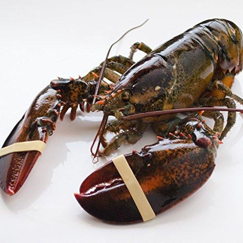 天然活オマール海老 500g 1尾 カナダ産 活物専門商社【魚活】