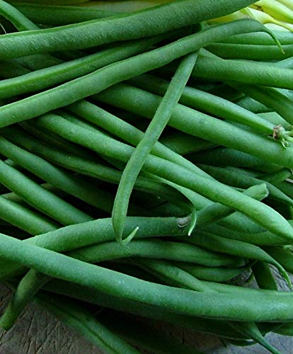 Jade Bush Bean Seeds, 100 Heirloom Seeds Per Packet, Non Gmo Seeds