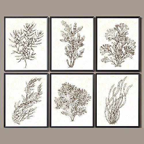 Set Wall Art Seaweeds Nautical Botanical Sea Modern Boho print Cosmic minimalistic scene Glam Art Poster Print Designer Brand