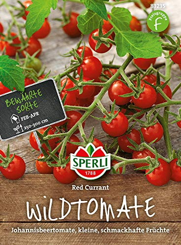 Tomate, Red Currant, Johannisbeertomate