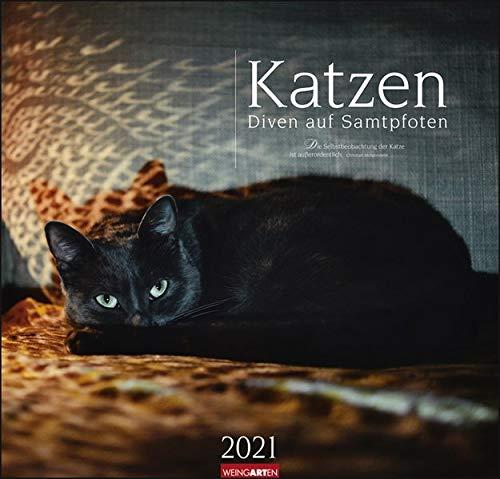 Katzen - Diven auf Samtpfoten Kalender 2021