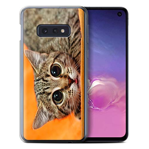 eSwish Phone Case/Cover/Skin/SG-GC/Funny Animals Collection Samsung Galaxy S10e Mooi katje