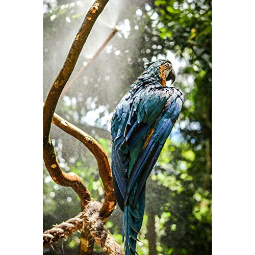 DIY 5D Diamond Painting by Number Kits,Full Round Drill,Diamond Embroidery Paintings Arts Craft for Home Wall Decor Bird On Branch 11.8x15.7 in by Megei