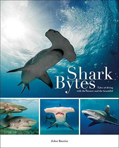Shark Bytes: Tales of Diving with the Bizarre and the Beautiful (English Edition)