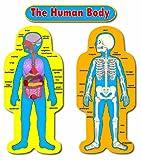Carson-Dellosa 3215 Child-Size Human Body Bulletin Board Sets