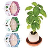 HuntGold2 Mini Novelty Cute Lucky Egg Shaped Potted Plants Egg Hatches Plant Desktop Decor Gift -Pink