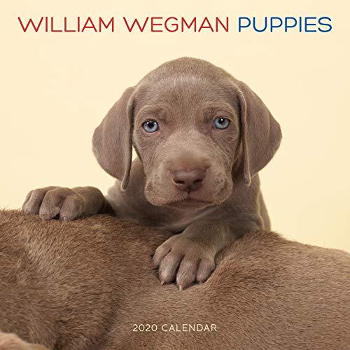 Wegman, W: William Wegman Puppies 2020 Wall Calendar