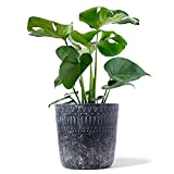 LE TAUCI 10 Inch Indoor Plant Pots, Cement Planter Pots with Drainage, Large Planters for Indoor Plants, Geometric Concrete Planter, Set of 1, Black