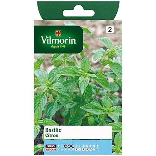 Vilmorin - Basilic Citron