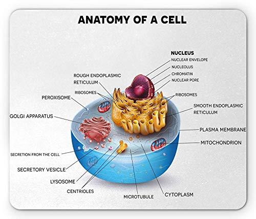 Pädagogische Mausunterlage, mikroskopische Bestandteile der Zellanatomie Bunte klare Mikrobiologie, rutschfestes Gummimousepad des Standardgrößen-Rechtecks, hellblaue purpurrote Aprikose,Gummimatte 11