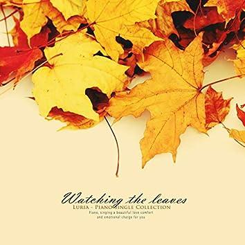 낙엽을 바라보며