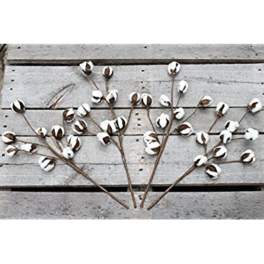 Pear Orchard Products Cotton Stem Branches - 20 Inch - Rustic Vase Filler - Farmhouse Decor for the Home (4)