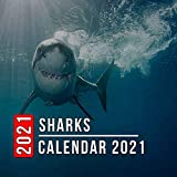 Sharks Calendar 2021: 12 Month Mini Calendar from Jan 2021 to Dec 2021, Cute Gift Idea | Pictures in Every Month