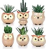Bekith Paquete de 6 macetas de cerámica para suculentas de búho, pequeñas flores bonsái, para cactus, hierbas, hogar, oficina, escritorio, ventana, 6 cm