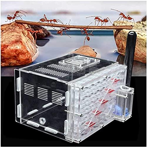 WSVULLD Ant Form, FORMICARIO Ant Nave para observar el hábitat de la Hormiga en Vivo, la Caja de Nido de la Hormiga acrílica Transparente, la casa de Las Hormigas para Las Hormigas de alimentación