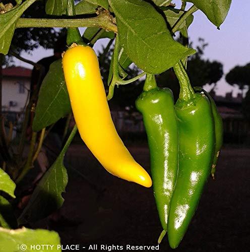 Portal Cool Sarit Gat (Kosovo) 10 Samen Früh Chili Knusprige frischen Geschmack