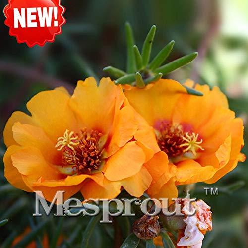 Bloom Green Co. New Bonsai !! 100 / pack orange Sun-Blumen-Anlage Balkon Garten Topfbonsaipflanzen Blumen Scutellaria barbata Bonsai