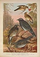 牧歌的な動物の鳥野生の果樹の森の風景油絵キャンバスプリントキャンバスの壁に印刷されたアートの装飾画像-40x60CMフレームレス