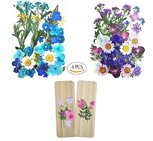 Flores reales prensadas naturales, hermosas y románticas, increíbles y atractivas. 2 paquetes de una mezcla de materiales de bonitas flores prensadas: flores con temas morados y flores azules (incluyen margarita, hortensia, flor de encaje, miosotis, ...