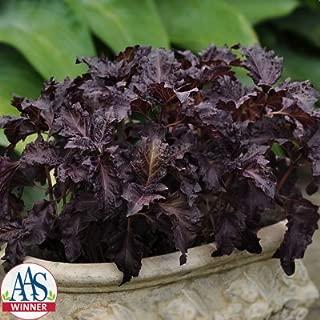 Basil Purple Ruffles Seeds - Herb Seeds Package - 1/4 Ounce Package