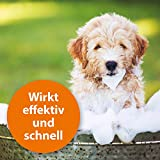 Quiko 077410 Ardap Anti Floh Shampoo für Hunde, 250 ml - 5
