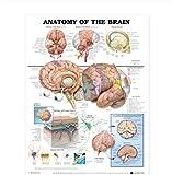 Relovsk Menschliche Anatomie des Gehirnsystems Plakat Anatomisches Diagramm Menschlicher Körper Medizinische Kunst Wandplakat Seidendruck für Bildung Wohnkultur.