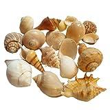 Natural Aquarium Fish Tank Decoration Seashells | Mix Real Sea Shells Fish Aquarium