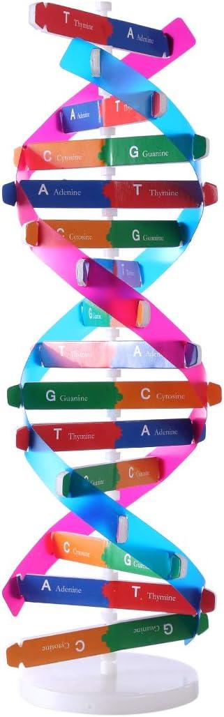 Lingxuinfo Kids Direct stock discount DNA Model Kit Genes Models Max 81% OFF Helix Double Scie