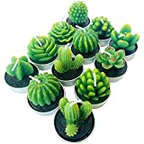 PIVBY Cactus Tealight Candles,Handmade Delicate Succulent Tea Light Candle Holder for Valentine's Day Birthday Party Wedding Spa Home Decoration,12 Pcs in Pack.