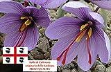 Bulbi di Zafferano Sardo (Crocus sativus) circonferenza 9/10 cm - PREVENDITA - BUONO D'ACQ...