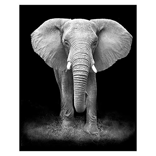 Canvas Painting Animals Wall Art Posters And Prints Wall Art Pictures For Living Room Home Decoration 50x70cm Frameless