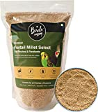 Ideal for Budgies, Lovebirds, Cockatiels, Canaries, Finches like Zebra Finch, Society Finch, Longtail Finch, Java Finch, Gouldian Finch, Owl Finch etc. A hand picked collection delicious Foxtail Millet (Kangni) seeds to meet daily nutrition requireme...