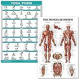 QuickFit Yoga-Posen und Muskelsystem Anatomisches Poster Set – laminiertes 2 Diagramm-Set – Yoga-Positionsübung & anatomisches Muskeldiagramm (45,7 x 68,6 cm)