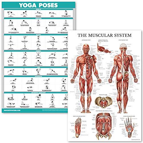 QuickFit Yoga-Posen und Muskelsystem Anatomisches Poster Set – laminiertes 2 Diagramm-Set – Yoga Position, Übung, Routine und Muskelanatomie Diagramm 45,7 x 68,6 cm, LAMINATED, 18