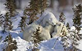 Rompecabezas de madera de 1000 piezas Patrón de osito polar Los rompecabezas grandes son un gran regalo para los amigos