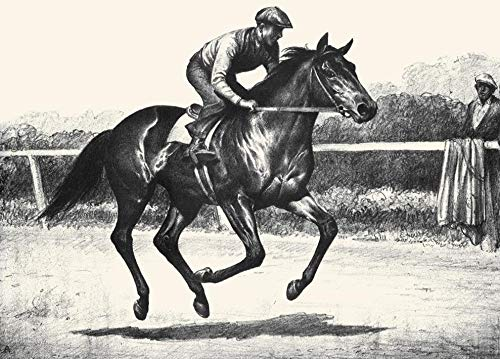 Illustration from The Book Black Bay and Chestnut Profiles of Twenty Favorite Horses by CW Anderson Poster Print by CW Anderson (24 x 36)