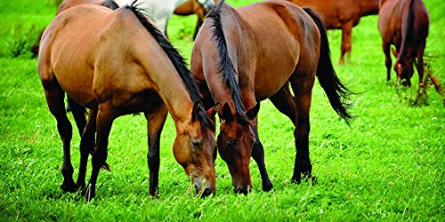 Nature's Seed PB-PSWH-1-A 1 Acre Pacific Southwest Horse Seed Pasture Blend