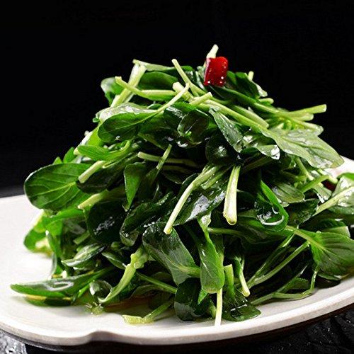 Paquet d'origine 10 Graines / Paquet, Jade graines de melon amer, beau jade graines gourde de légumes simples