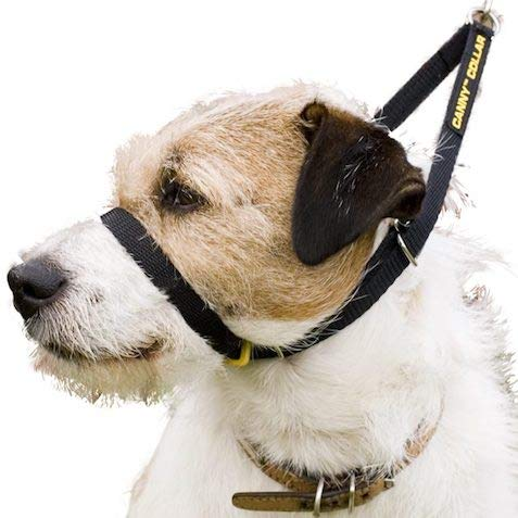 Canny Collar - The Collar for Dog Training and Walking, Helps with Dog Training and Helps to Stop Dogs Pulling on The Leash - Black