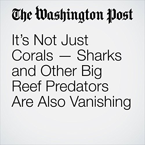 It's Not Just Corals — Sharks and Other Big Reef Predators Are Also Vanishing copertina