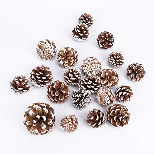 JEKOSEN 20PCS Pine Cones with String for Home Decor Natural White Pine Cone for Crafts Christmas Trees Decoration Ornaments Small Pinecones Decorations (Transparent-String)