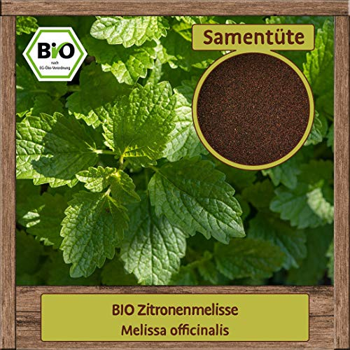 Samenliebe BIO Kräuter Samen Zitronenmelisse (Melissa officinalis)   BIO Zitronenmelissesamen Kräutersamen   BIO Saatgut für ca. 4 m²
