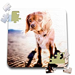 Sven Herkenrathペット – A Cute Dog on the beach at sunsetペット犬ペキニーズ – 10 x 10インチパズル(P。_ 262448 _ 2 )[3dRose/Amazon]